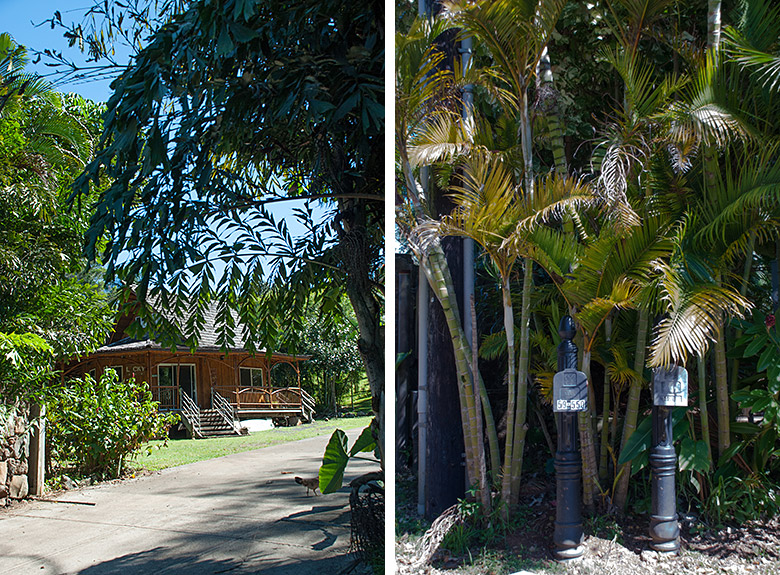 Left: Bamboo house. Right: Mailboxes and palm trees