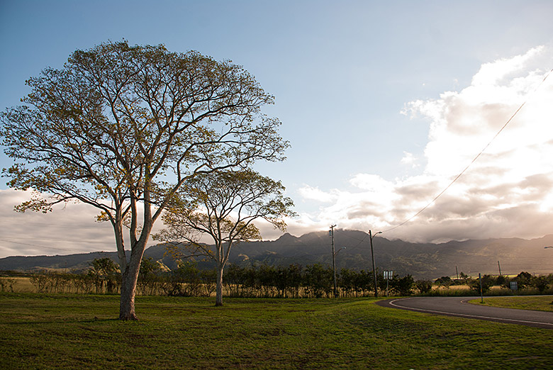 The road to Haleiwa at dusk