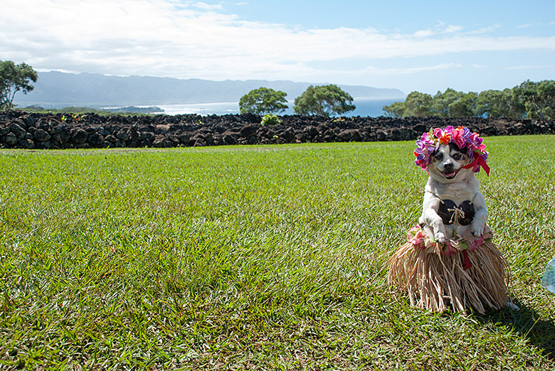 We met a hula dog!